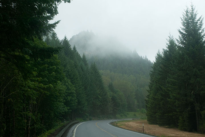 foggy evergreen forest road in Oregon